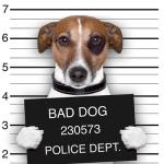 Mugshot-Dog-44085748