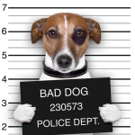 Mugshot-Dog-44085748